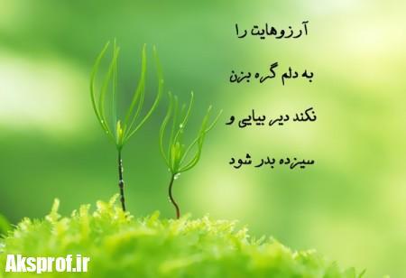 عکس-یزده-بدر-6