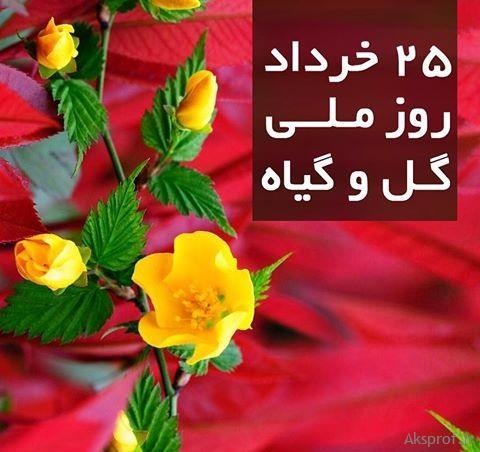 عکس پروفایل روز گل و گیاه