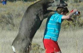 جفت گیری آدمیزاد و جفت گیری انسان با حیوان