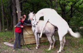 جفت گیری اسب از نزدیک